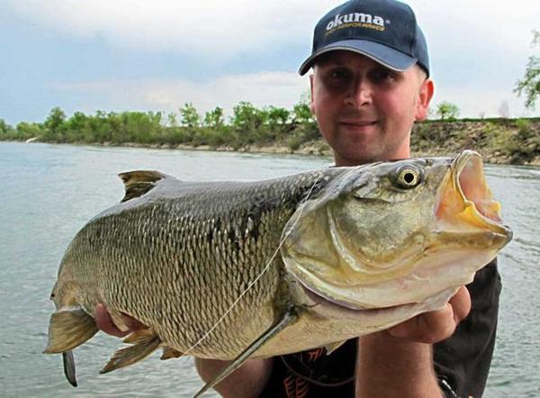 Ловля жереха - статьи и видео - статьи - Рыбалка на Дунае