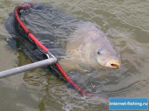 пшено для прикормки рыбы видео