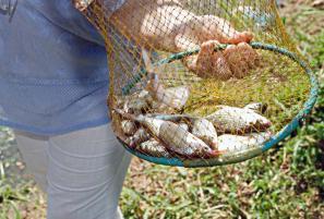 Камбоджа: ловля барбусов
