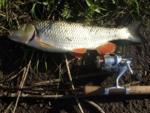 Ловля голавля на спиннинг: малые реки