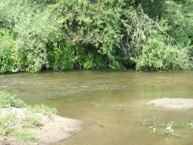 Голавль держится под берегом с нависшими над водой кустами и деревьями
