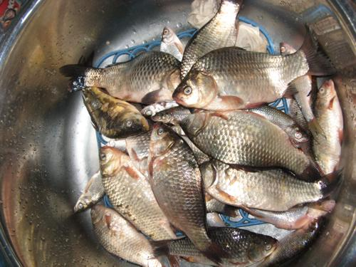 ловля рыбы на брыни