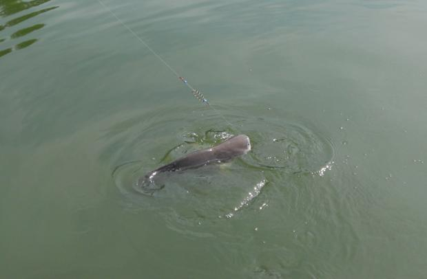 Рыба показалась из воды