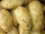 Ловля на картофель
