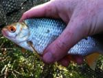Ловля плотвы весной. Первая весенняя рыбалка