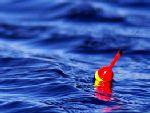 Философия поплавка